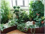 Четыре правила композиции из комнатных растений