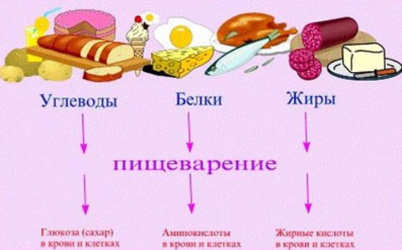 Что относится к белкам