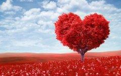 Как порадовать любимого 14 февраля?